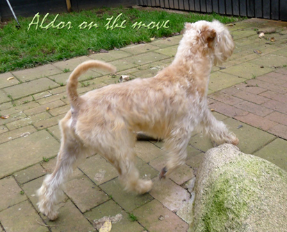 Aldor-11-m-on-the-move.jpg