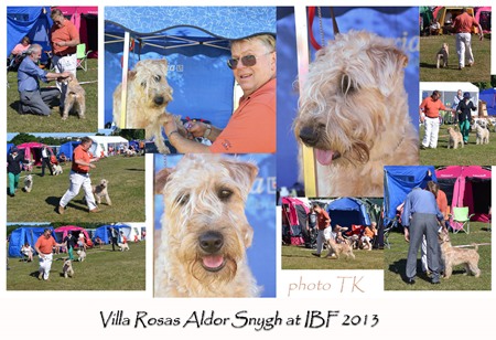 Aldor-at-Irish-Breed-2013_r.jpg