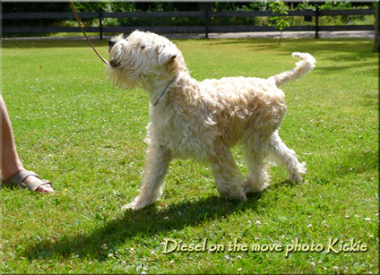 Diesel-on-the-move.jpg