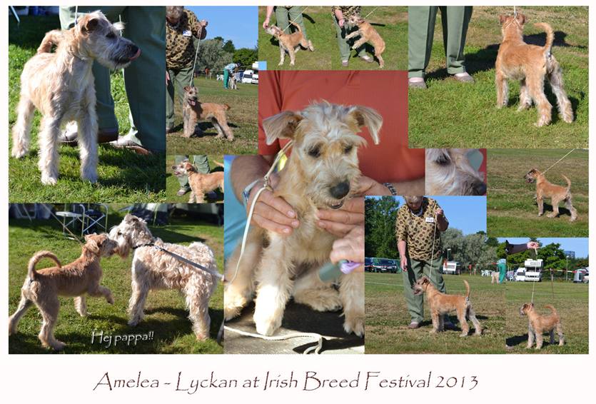Amelea-at-Irish-Breed2013.jpg