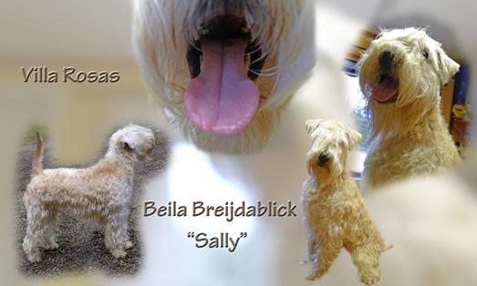 Beijla-Sally-15-months-koll.jpg