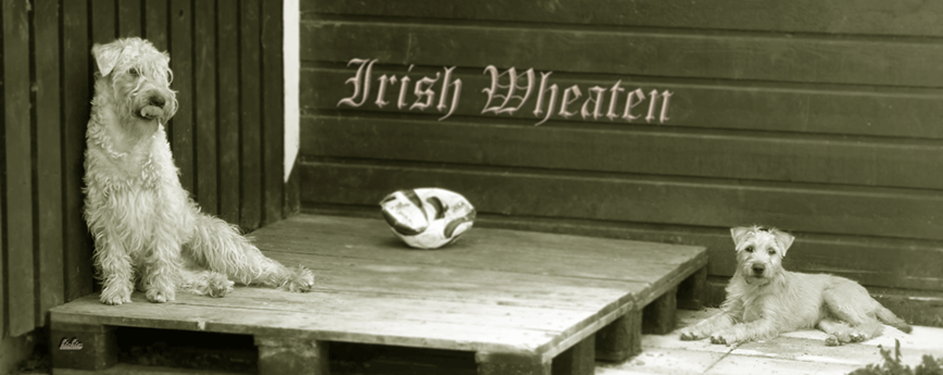 Banner-Irish-Wheaten.gif