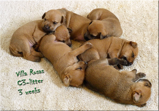 C3-litter-3-weeks.jpg