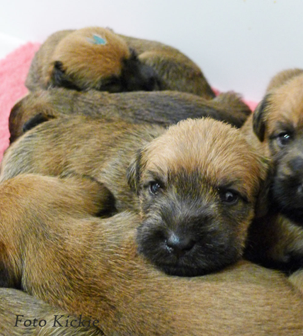 F3-35v-A-pile-of-puppies.jpg