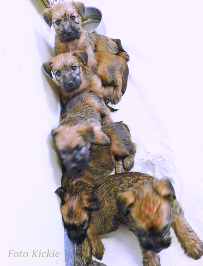F3-5v-A-pile-of-puppies.gif