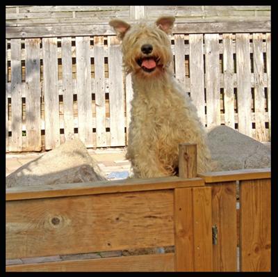 Jumpin-fence4-Razzle.jpg