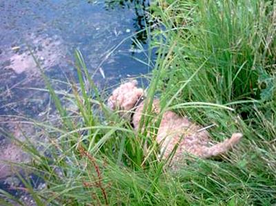 Gigo-is-going-swimming.jpg