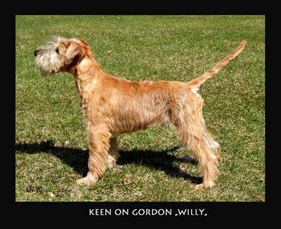 Keen-On-Gordon-Willie-45mo.jpg