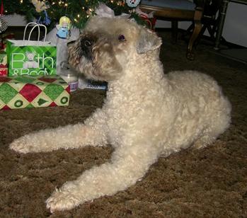 Skatan--Christmas-2009.jpg