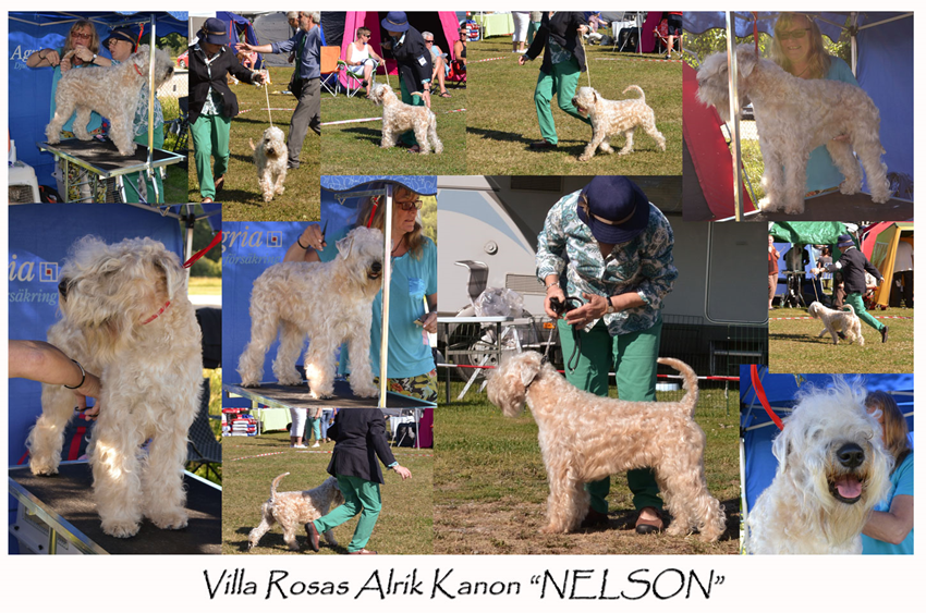 Nelson-at-IrishBreed-2013.jpg