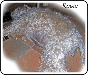Rosie-pregnant-in-7th-week.gif