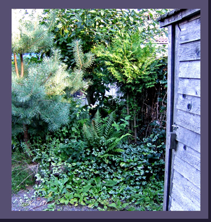 At-the-garden-shed.jpg