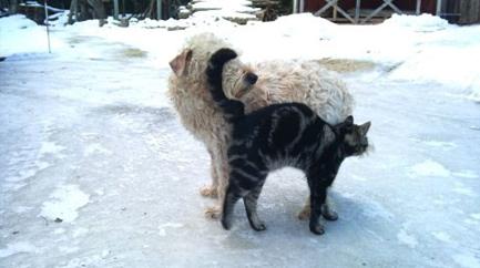 lyckan-nora-o-katten.jpg