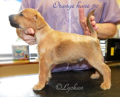 Lyckan-orange-hane-5v.jpg