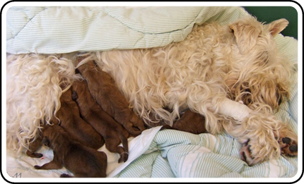 Z2-Rhodda-and-newborn-pups.jpg