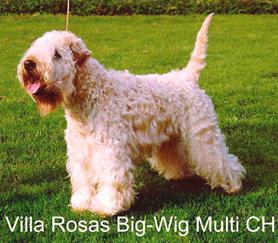 big-wig2-(2)-2.jpg