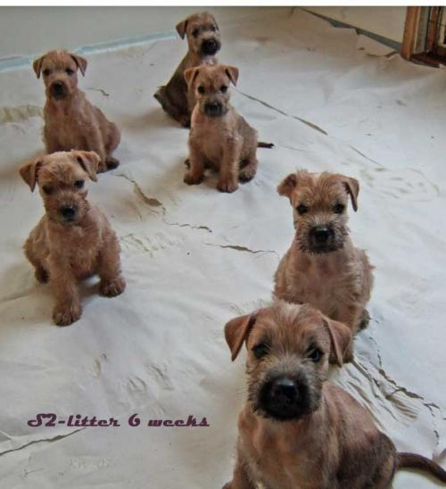 s2-litter-6-weeks