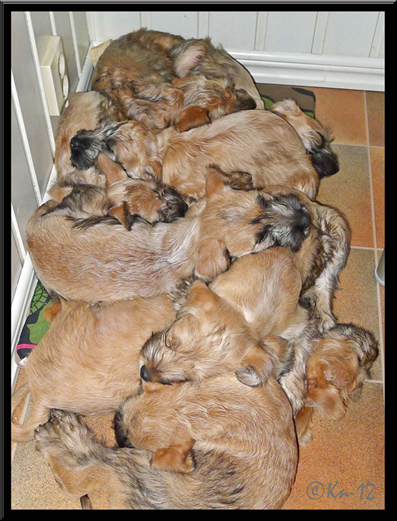 A-bounch-of-puppies-(A3-8w).jpg
