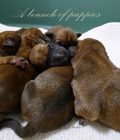 A3-a-bounch-of-puppies-1day.jpg